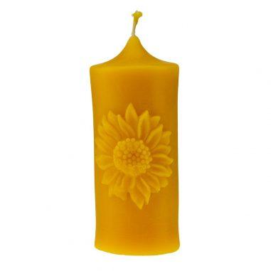 Sonnenblume Stumpe